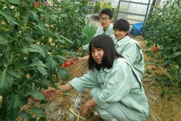 春作野菜の栽培管理