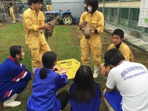 大阪アヒルとアイガモの飼育体験