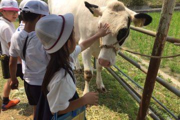 酪農教育ファーム活動を実施しました!!