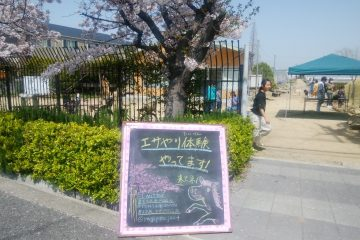 3月31日百年の丘公開はお天気で桜満開でした。