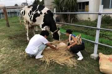 子牛が産まれました!