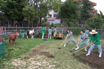 農芸祭に向けての作業①(圃場整備)