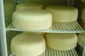 熟成チーズ?巨大なマシュマロ??