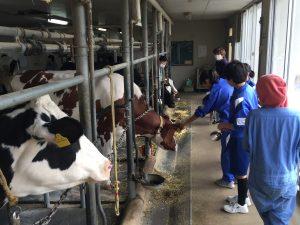 牛の飼育体験