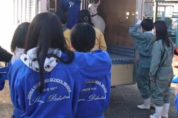 勝山高校からヤギが戻ってきました(レンタル終了)