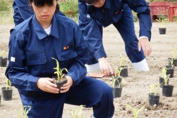 自分の畝で農業の基礎を学ぶ