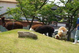 百年の丘 ふれあい動物公開日状況(4月30日)