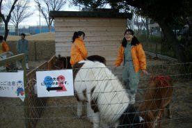 今年最後のふれあい動物園活動(イベント・地域交流)