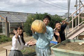 野菜専攻「農芸祭」