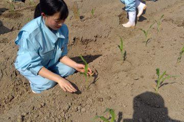 栽培を学ぶ!1年生農業と環境