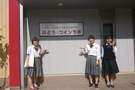 大阪ブドウの活性化に向けた支援プロジェクト