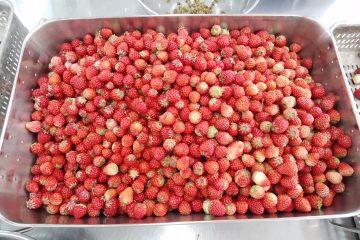 イチゴのへた取りをしています!