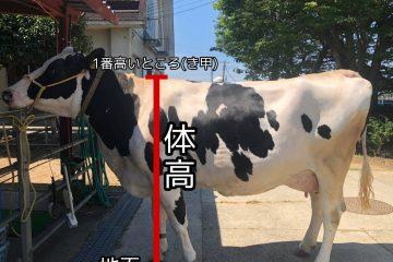 ヒナタ号の100日飼育日記~8日目~