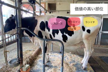 ヒナタ号の100日飼育日記~71日目~