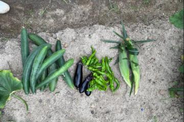 1年生 農業と環境 ~初めての収穫~